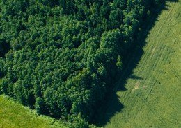 Forestry investment and investing in commercial woodlands